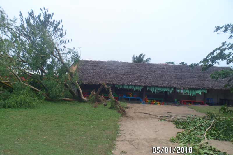 Tropical Cyclone Ava Damages Trees