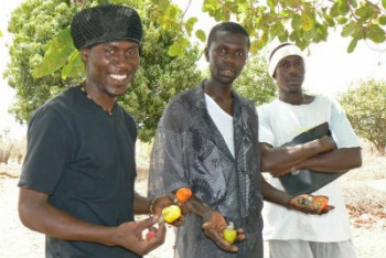 Three young men holding vegetables in The Gambia